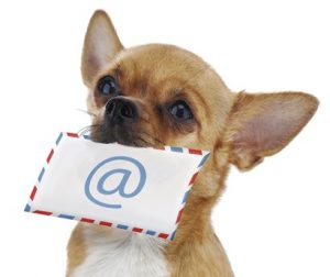 Red chihuahua dog with post envelope and icon e-male isolated