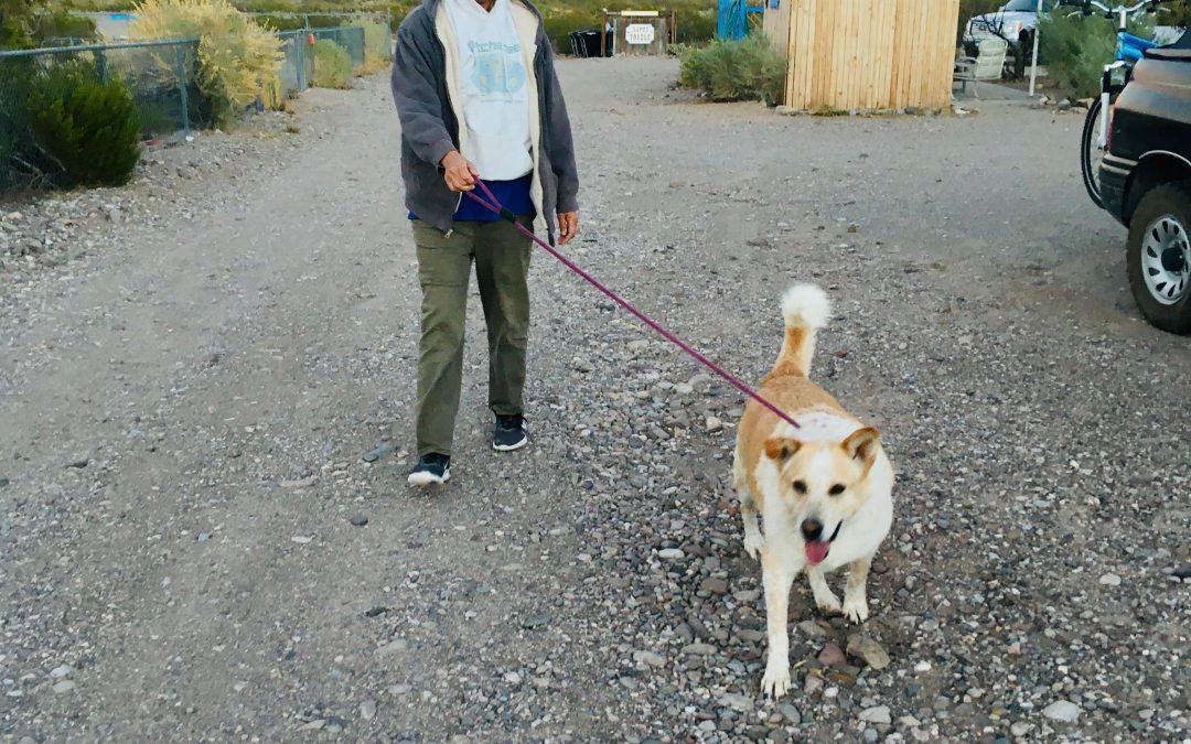 Dogtown's Longtime Resident