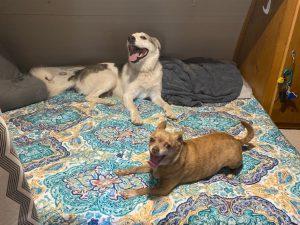 Koda & Tyson